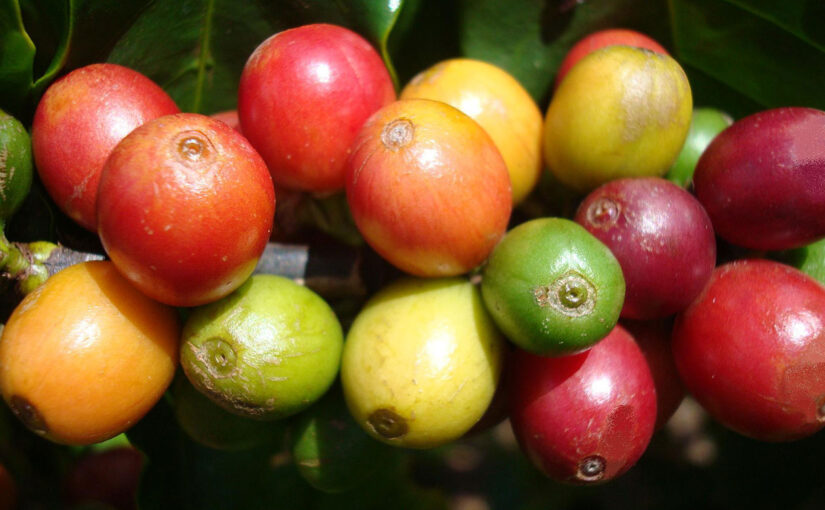 Quick Guide to Coffee Varieties
